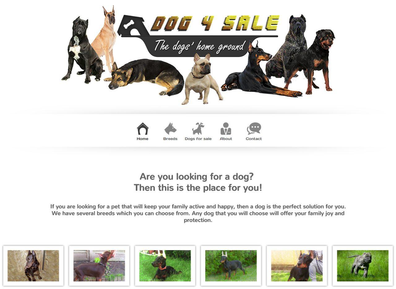 optimizare seo agentie web design timisoara dog4sale
